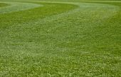 stock photo of fescue  - Fresh Cut green grass on a new field - JPG