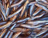 small fry (anchovy) for sale
