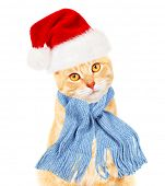 foto of yellow tabby  - Ginger santa cat isolated on white background - JPG
