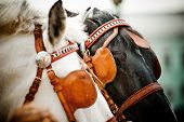 pic of shire horse  - two horses portrait in a  carriage closeup - JPG