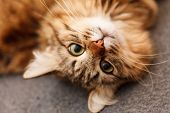 stock photo of cute animal face  - nice cat - JPG