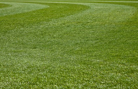 picture of fescue  - Fresh Cut green grass on a new field - JPG