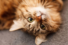 picture of furry animal  - nice cat - JPG