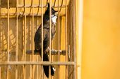 stock photo of bulbul  - Red - JPG