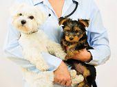 foto of veterinary  - Veterinary treatment  - JPG