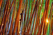 foto of bamboo forest  - Bamboo forest with colorful illumination at night