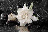 image of gardenia  - spa concept  - JPG