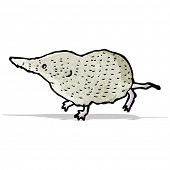 stock photo of shrew  - shrew illustration - JPG