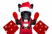 picture of dog christmas  - Santa claus christmas dog wearing a hat isolated on white background - JPG