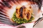 foto of scallop shell  - Studio closeup of seared scallops garnished with pea shoots and served on a bed of green and purple curly lettuces presented on a scallop shell - JPG