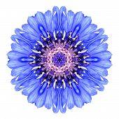 picture of hallucinations  - Blue Cornflower Mandala Flower - JPG