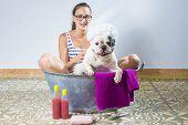 stock photo of wash-basin  - Woman washing a dog french bulldog breed in old bathtub - JPG