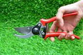 pic of grass-cutter  - Hand with Red garden secateurs on green grass background - JPG