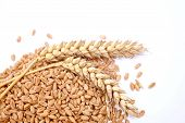 stock photo of spike  - Wheat grains and cereals spike - JPG