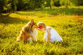 pic of sheltie  - Little girl and dog breed sheltie playing outdoors on a sunny day - JPG