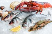 foto of ice fishing  - Fresh catch of fish and other seafood on ice - JPG