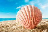 image of scallop-shell  - beautiful scallops shell on the sandy beach - JPG