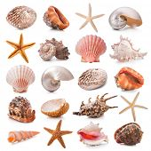 image of scallop-shell  - Seashell collection isolated on the white background - JPG