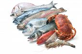 image of mullet  - Fresh catch of fish and other seafood isolated on white background - JPG