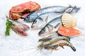 picture of ice fishing  - Seafood on ice at the fish market - JPG