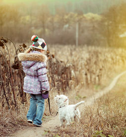 stock photo of westie  - happy cute girl with her dog breed White Terrier walking in a field - JPG