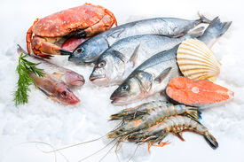 picture of shell-fishes  - Seafood on ice at the fish market - JPG