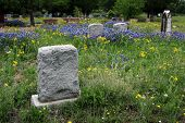 image of bluebonnets  - A stone market stands in the middle of a cemetery amidst the Texas wildflowers - JPG