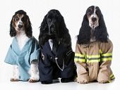 picture of firefighter  - three dogs wearing doctor - JPG