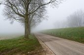foto of row trees  - Country road in a rural landscape with a row of bare trees - JPG