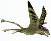 foto of carnivores  - Peteinosaurus was a small carnivorous pterosaur from the Triassic Period and was found near Cene Italy - JPG