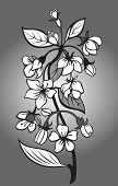 pic of black-cherry  - vector illustration of branch of blossom cherry in black and white style - JPG