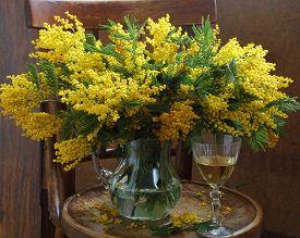 pic of mimosa  - Still - JPG