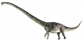 image of herbivore  - Omeisaurus is a herbivorous sauropod dinosaur that lived in the Jurassic Period of China - JPG