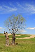 pic of pasture  - Rural landscape with pasture fields and willow - JPG