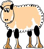 pic of laughable  - White sheep - JPG