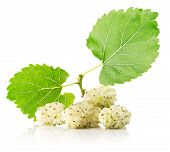 image of mulberry  - white mulberries isolated on the white background - JPG