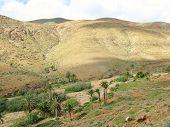 foto of canary-islands  - The green valley of Vega de Rio Palmas on the Canary Island Fuerteventura - JPG