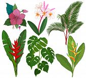 stock photo of jungle flowers  - Tropical leaves and flowers vector illustration - JPG