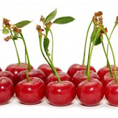 picture of food truck  - cherries isolated on a white background - JPG