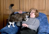 Image of the old woman stroke a cat.