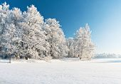 image of winter landscape  - Winter park in snow - JPG