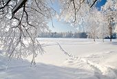 stock photo of sleet  - Winter park in snow - JPG