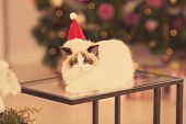 Cat. Christmas party, winter holidays cat with gift box. New year cat. christmas tree in interior ba poster