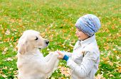 image of laika  - Boy playing in autumn park with a golden retriever - JPG