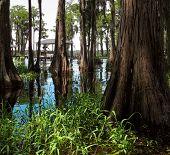 stock photo of bayou  - Beautiful swamp on a bright sunny day  - JPG