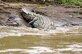 Croc 3 poster