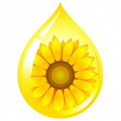 picture of oil drop  - vector sunflower - JPG