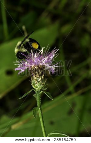 A Bumble Bee Almost As