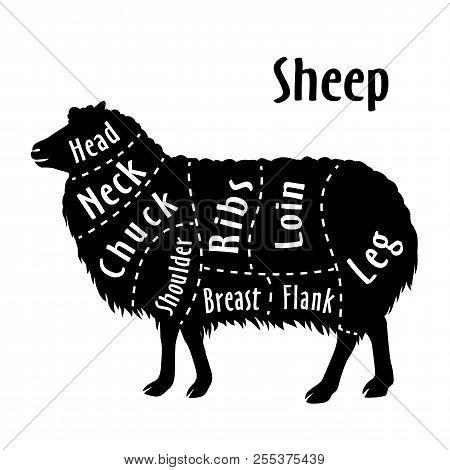 Cut Of Sheep Diagram For