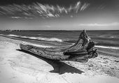 Driftwood On Beach In Dramatic Black And White. Peaceful And Inspiring Fine Art Image. poster